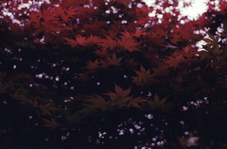 Fuji64D 2