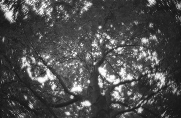 KodakXX 5